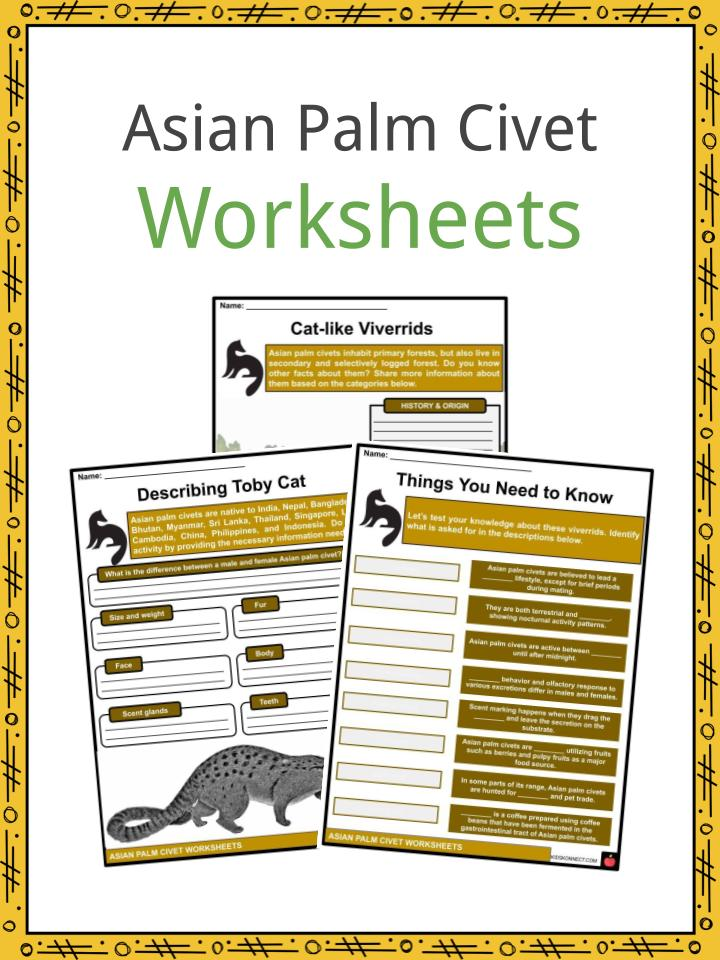 Asian Palm Civet Worksheets