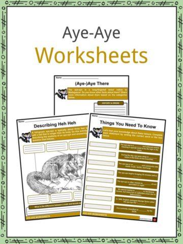 Aye-Aye Worksheets