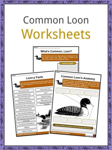 Common Loon Worksheets
