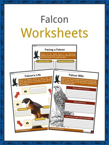 Falcon Worksheets