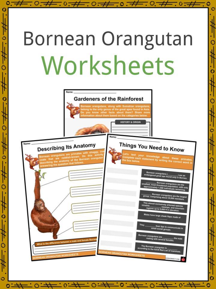 Bornean Orangutan Worksheets