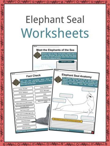 Elephant Seal Worksheets