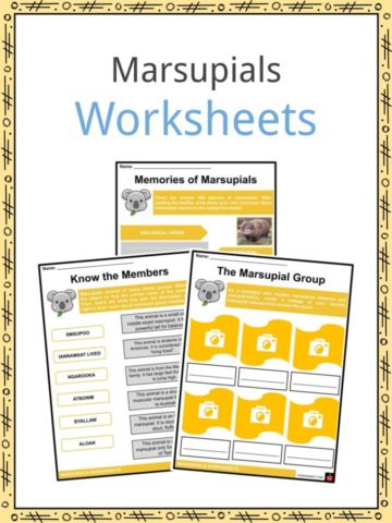 Marsupials Worksheets