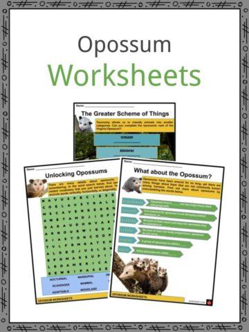 Opossums Worksheets