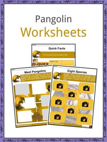 Pangolin Worksheets
