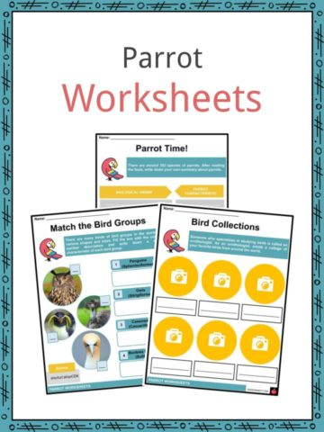 Parrot Worksheets