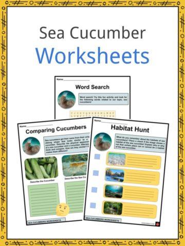Sea Cucumber Worksheets