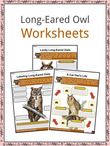 Long-Eared Owl Worksheets
