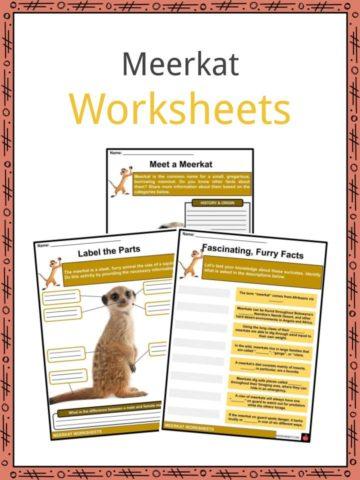 Meerkat Worksheets