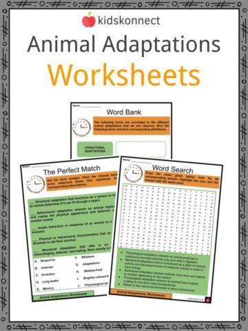 Animal Adaptations Worksheets